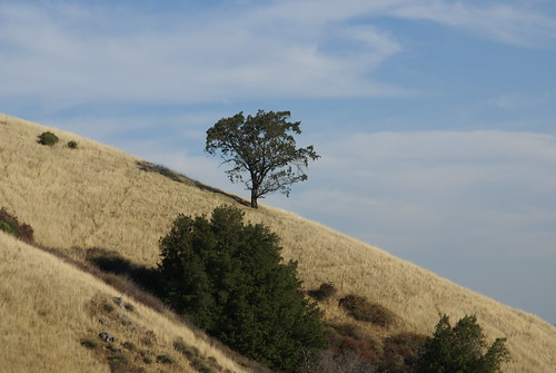 Monte Bello Open Space Preserve | by dbaron