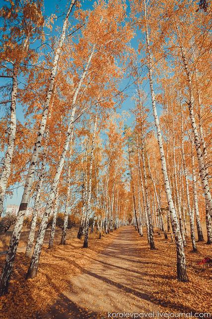 Autumn-013