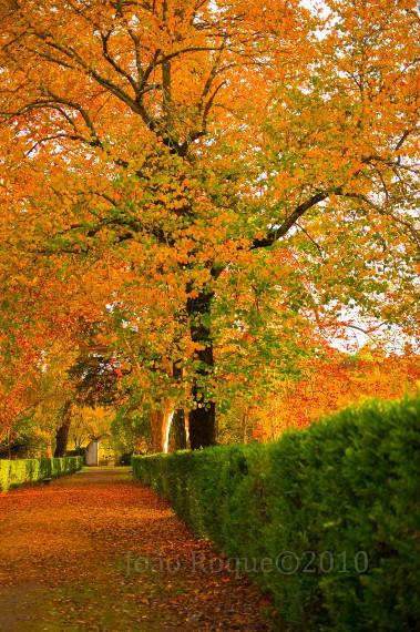 Fotografia em palavras: Cores do Outono