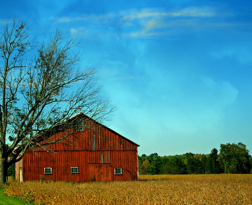autumn ohio sky tree field barn rural farm crop soybeans 2014 allianceohio soybeanfield harvestime starkcountyohio goldenseason bandyroad