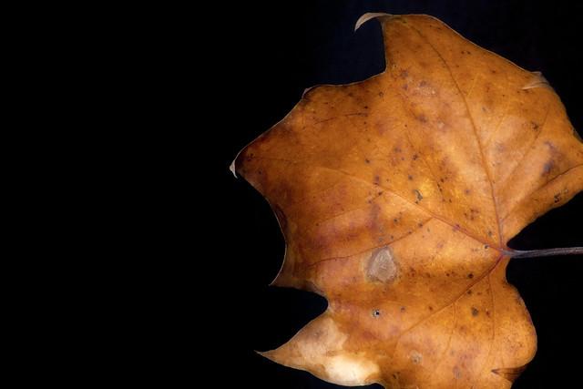 Salvaged Leaf