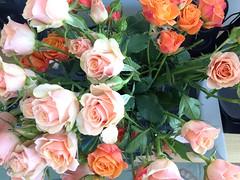 flower arranging(1.0), garden roses(1.0), cut flowers(1.0), rosa 㗠centifolia(1.0), floribunda(1.0), flower(1.0), artificial flower(1.0), floral design(1.0), plant(1.0), flower bouquet(1.0), floristry(1.0), pink(1.0), petal(1.0),