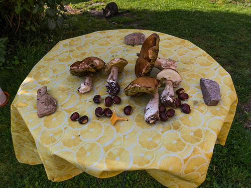 Ceps and other autumn things