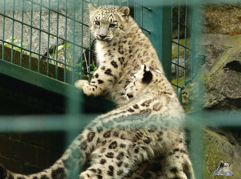 Tierpark Berlin 26.10.2014 79