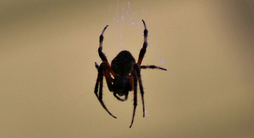 CrabAppleLane Wildlife - October 26, 2014