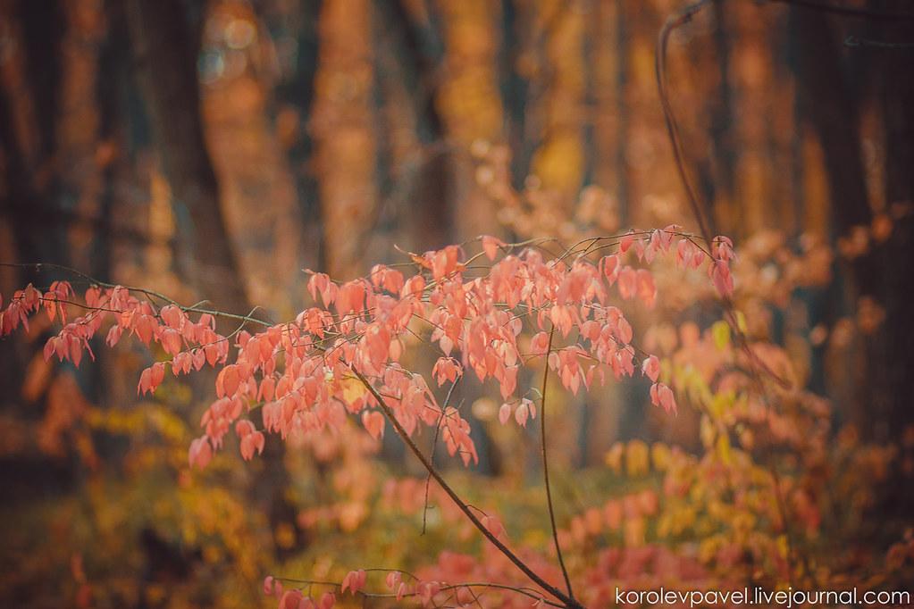 Autumn-301