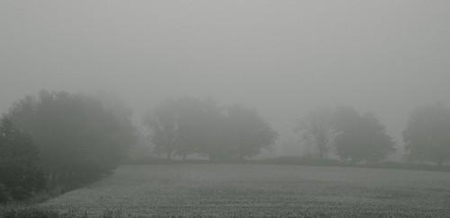blackandwhite mist field fog landscape nikon farm missouri soybean treeline nikond5000 skyemarthaler bloomfieldmo