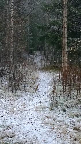 forest finland path kittilä pureview nokialumia1020