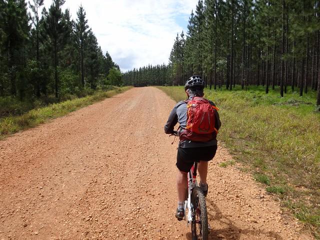 Toolara State Forest