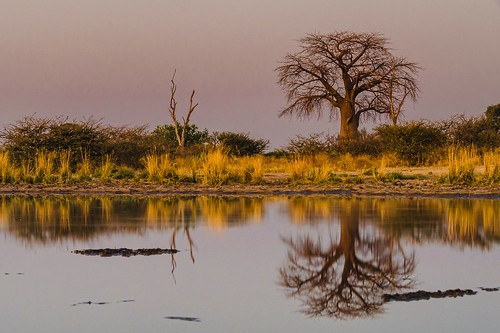 africa sunset reflection nature landscape nikon wildlife safari lastlight baobabtree nikond7000