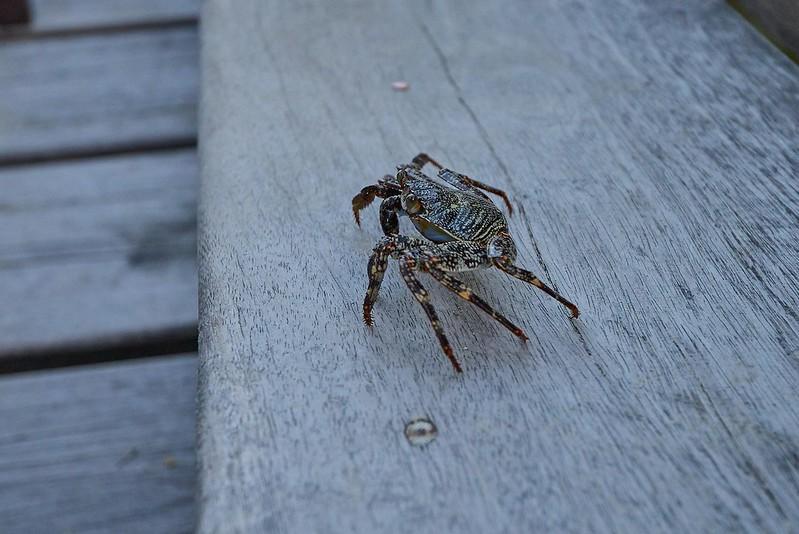 Crab - Belize