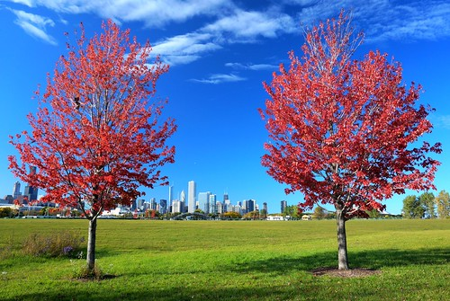 blue autumn red chicago color green fall colors leaves skyline lowresolution colorful fallcolor searstower lakemichigan fallfoliage foliage lakeshore polarizer cpl redleaves chicagoskyline autumncolor polarizingfilter polarizing northerlyisland redfoliage chicagonature willistower photoshoptouch northerlyislandpark accidentallylowresolution