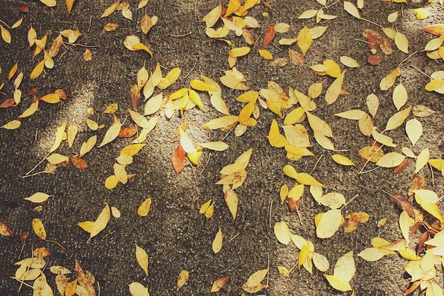 Morning walk in autumn