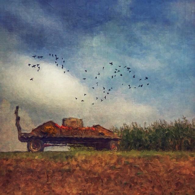 Cornfields and hayrides.