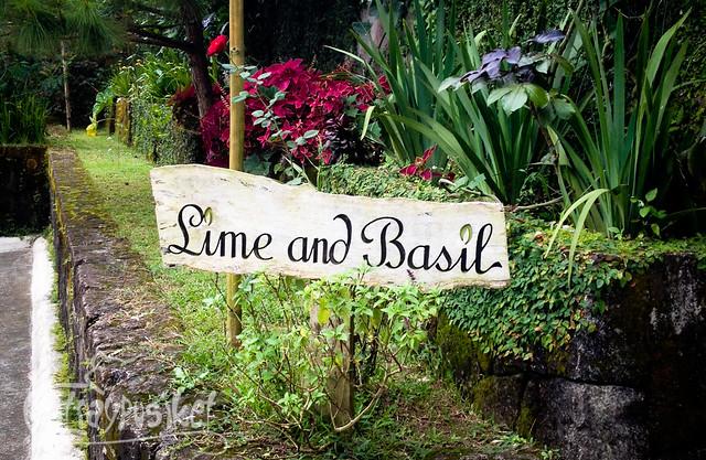 Lime and Basil