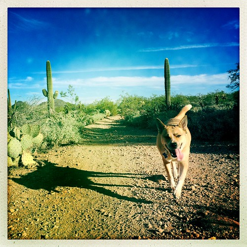 arizona cactus dog desert hiking az hike perro trail xavi sonorandesert newriver blackcanyontrail johnslens hipstamatic inas1982film