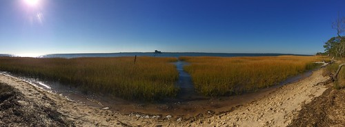 End of the Bivalve Trail, Chincoteague NWR