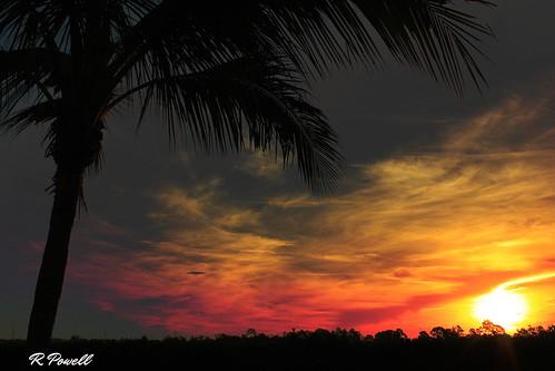 sky sun nature sunrise canon landscape florida palm palmtree redsky estero southwestflorida naturephotographer leecountyfl esterofl platinumheartaward robertbobbypowell imagesofflorida rpowell heatherstonecondoview