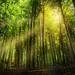 im Wald by Chrisnaton
