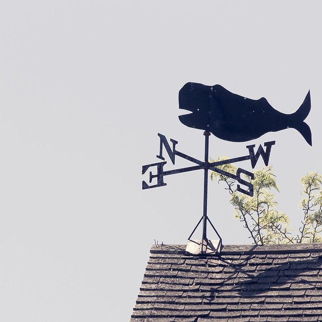Follow the Northeast Whale
