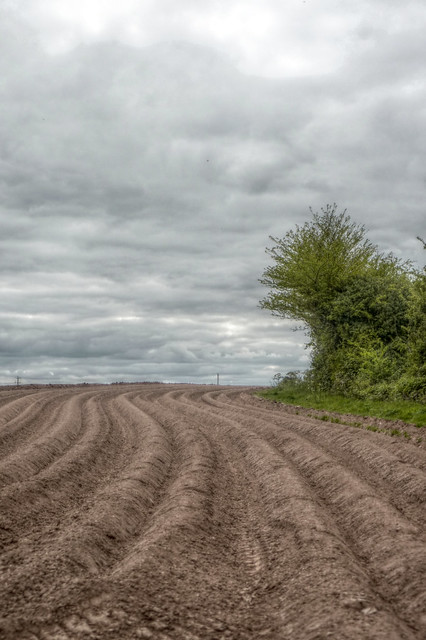 Bartestree - ploughed furrows, Panasonic DMC-TZ6