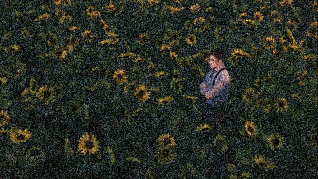 Regarding sunflowers