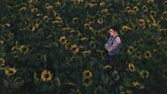 Regarding sunflowers