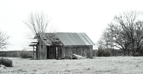 collapsing grass abandoned haybale sky cloudy horizon detritus fence junk corrugatedroof brokenroof weathered winter baretrees peelingpaint barewood