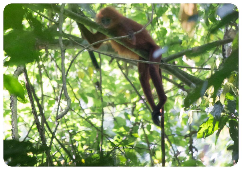 Borneo-20170412-_MG_7849