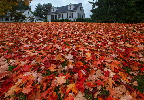 autumn red plant tree green fall nature colors leaves yellow gold golden leaf october natur greenery neighbour neighbor vicinage