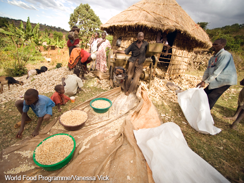 The number of food-insecure people in Sub Saharan Africa is projected to rise over the next decade. But modern, higher yielding crop varieties hold promise for improvements in the region's food security situation. USDA's Economic Research Service provides annual 10-year projections of international food security.