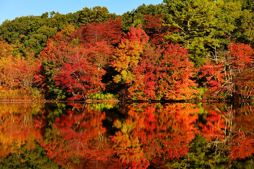 trees usa fall reflections nikon unitedstates newengland foliage rhodeisland d610 southkingstown barberpond