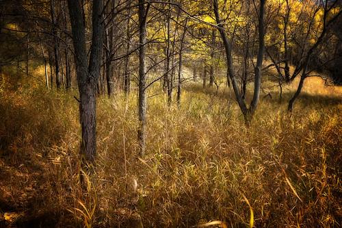 autumn trees color fall grass leaves nikon foliage prairie nikkor plains d4 247028