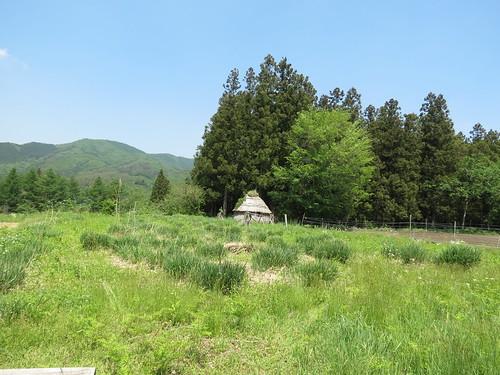 Yamaguchi Dendera-no Field