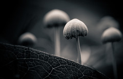 Little fungi