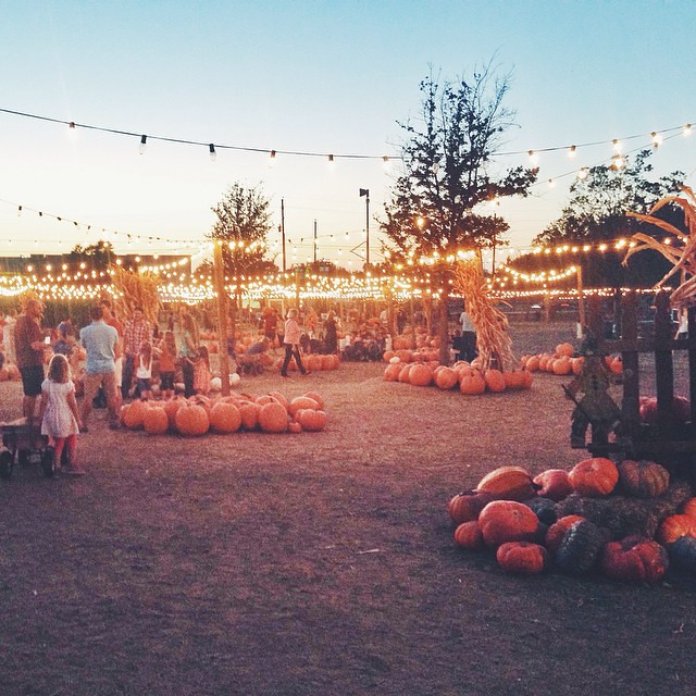 A beautiful evening at Hall's Pumpkin Patch.