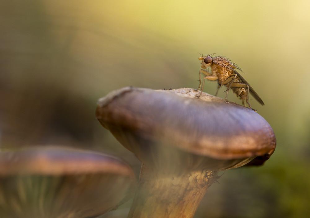 The mushroom lover