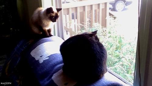 Feline Standoff