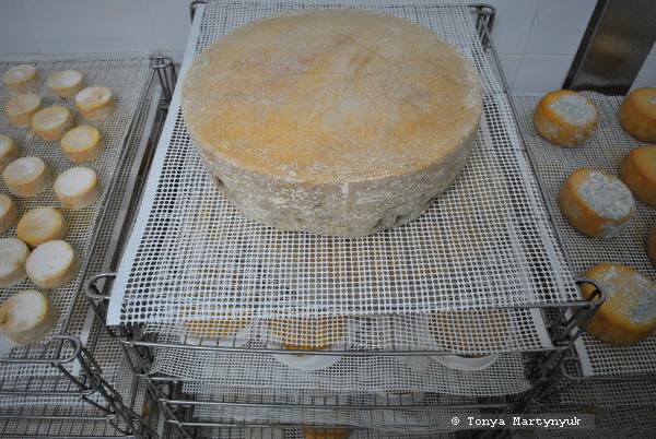 10 - мастер-класс по приготовлению сыра - традиции Португалии