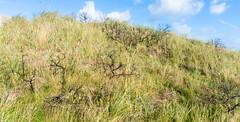 prairie, shrub, steppe, grass, tree, shrubland, plant, flora, natural environment, meadow, biome, vegetation, grassland,
