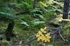 A splendor of plant life