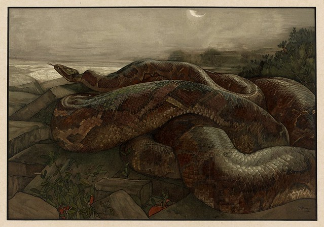 007-Kaa la piton-Sixteen illustrations of subjects from Kipling's Jungle Book-1903 -Library of Congress
