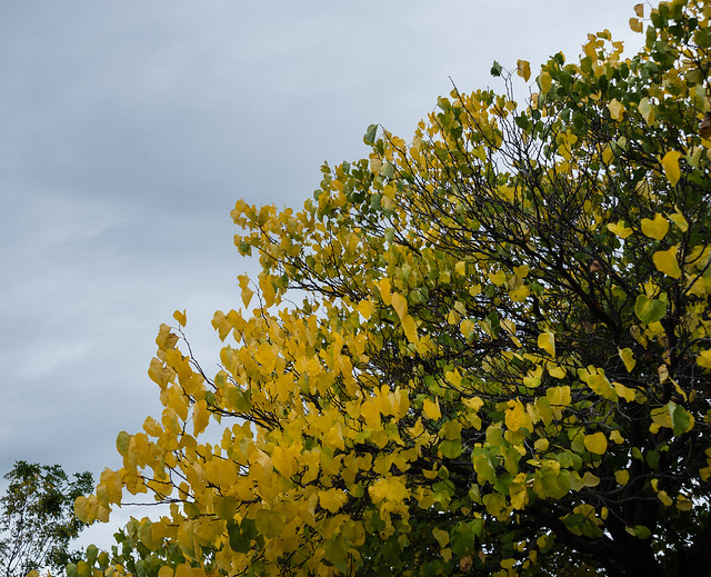 Gray October Sky, Bright Leaves 1