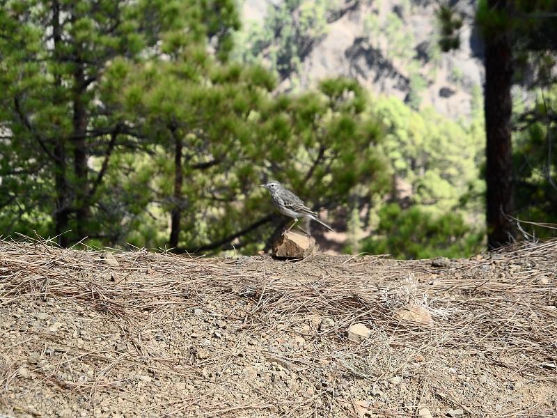 Vacaciones Guela. La Palma. 73 fotos 15302658030_93903eb24e_b