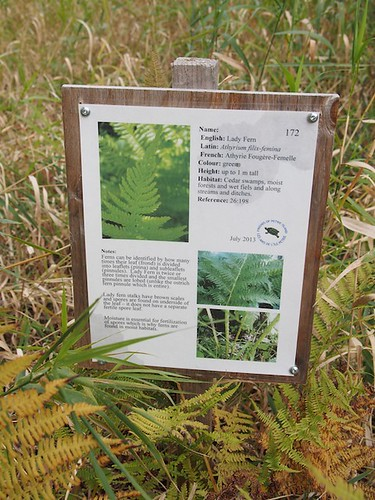 fern descriptor