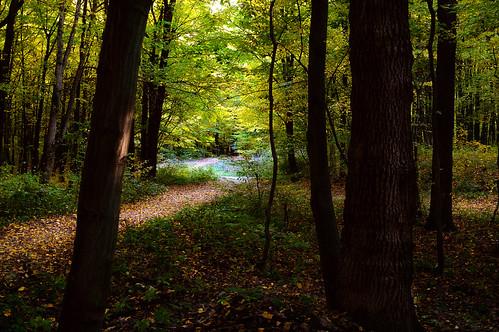 park autumn trees light sunset nature leaves dark landscape golden woods darkness ukraine pathway vinnytsia