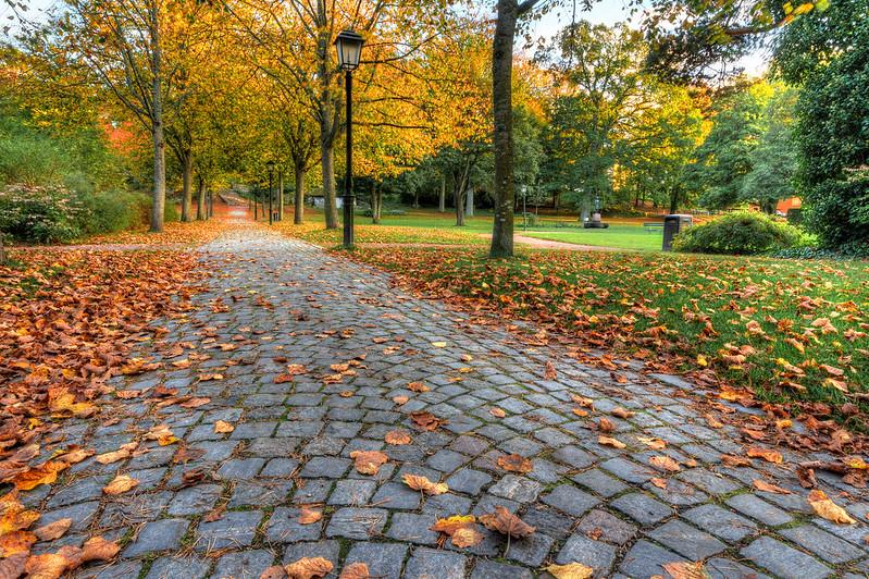 Lövklädd gångväg