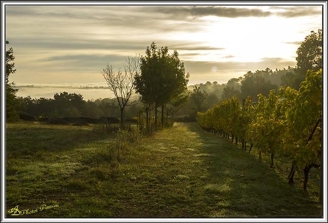 Lever de Soleil sur les Vignes 04