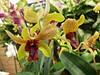 Day 292: Pretty Orchid