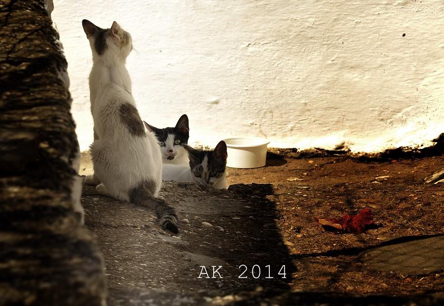 Thassos Cats Kalirachis